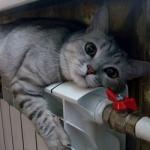 Симферопольца с «отрезанным» отоплением 4 года заставляют платит за тепло